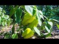 Organic Pest Control, Gardening With Nature