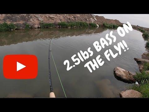 Fly Fishing Bass in Yuma Arizona Canals