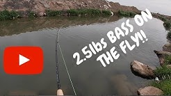 Bass Fishing Arizona | Fly Fishing for Bass | Yuma Arizona Canals | Harvestland TV