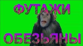 Футажи обезьяны на зеленом фоне скачать бесплатно. Footage monkey on the green background download.