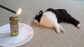 Waking a sleeping rabbit with a firecracker