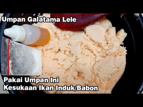 Umpan Galatama Lele Olahan Sederhana Keju Basi Nimbang Induk Babon 2 Kali Youtube