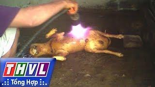 THVL | Người đưa tin 24G: Thâm nhập lò tiêu thụ chó trộm cắp