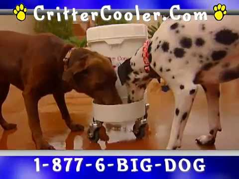 Critter Cooler Automatic Dog Water Bowl for Healthy Pet, Cool Dog Stuff