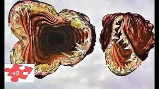 Лангорьеры / по Стивену Кингу / фантастика, драма / фильм из детства / свой трейлер 1995