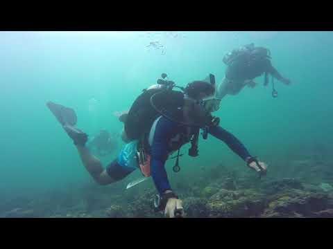 الغوص في فشت العظم - Diving in Aladhom Reef, filmed by Ali Aman