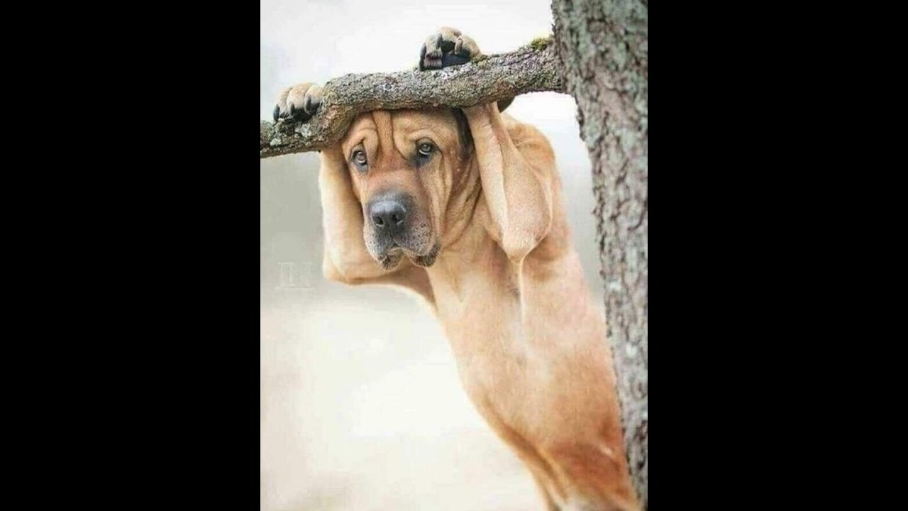 Funny Dog ♥Cute Puppies Doing Funny Things 2020♥  1