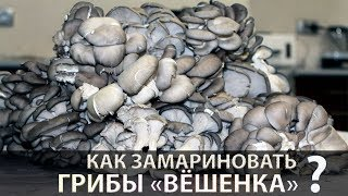 Маринованные грибы Вёшенка (быстро и вкусно)   Вешенки маринованные
