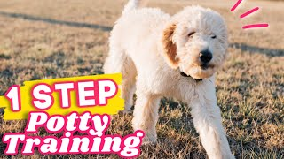Potty Training a Puppy? WATCH THIS 🐶 1 step to STOP puppy potty accidents