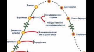 Этапы жизненного цикла организации