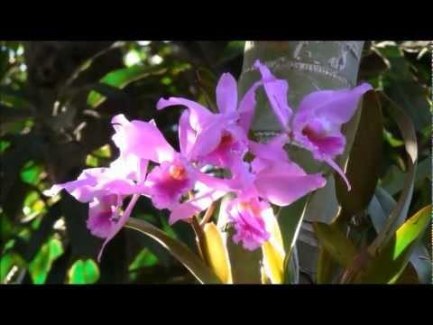 ORQUÍDEAS - Cultivo Em Pequenas Estufas - Dunga