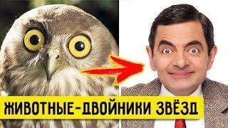 ДВОЙНИКИ ЗВЁЗД (животные, похожие на знаменитостей)