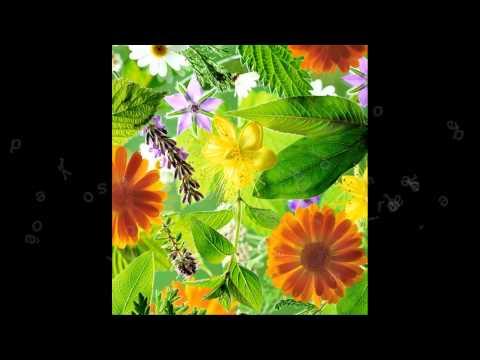 Uso de fiterapicos em animais de pequenos produtores