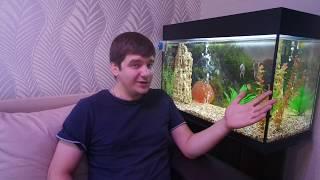 Как чистить аквариум.