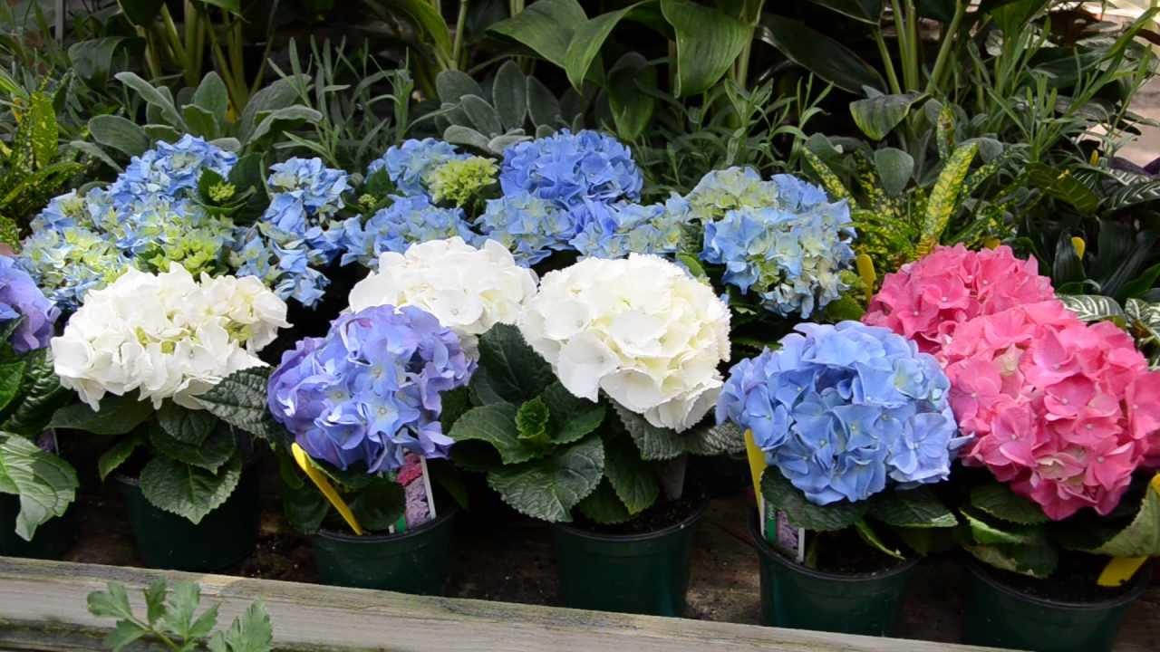 USF Botanical Gardens Spring Plant Sale