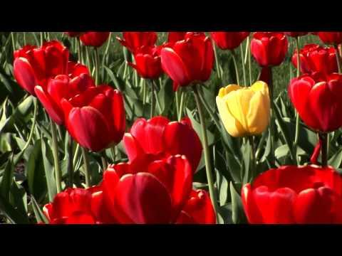 Красивый ролик - Цветы для женщины