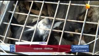В Алматы бродячие собаки загрызли трехлетнюю девочку