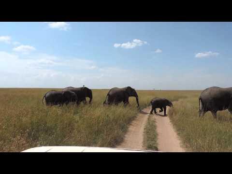 Masai Mara Adventure Budget Safaris -YHA Kenya Travel Tours & Safaris.