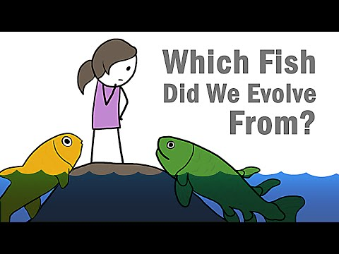Which Fish Did We Evolve From?