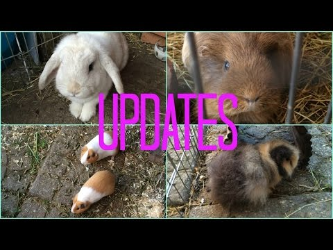 Updates and Snowdrop on her Harness | Furry Friends
