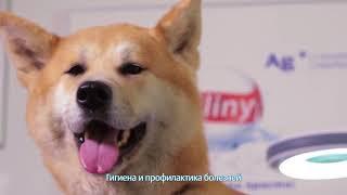 Уход за зубами животных со средствами Cliny
