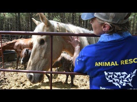 A Closer Look: 150+ Horses Rescued