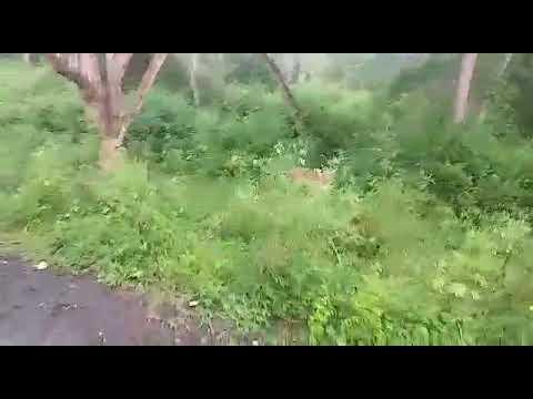 Sathyamangalam Tiger reserved Forest.. Thalamallaii....