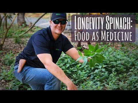 Food as Medicine: Growing LONGEVITY SPINACH for Your Health!