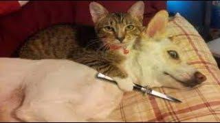 Боевые коты! Приколы с котами кошки против собак.##30 Fighting cats! Сats against dogs.##30