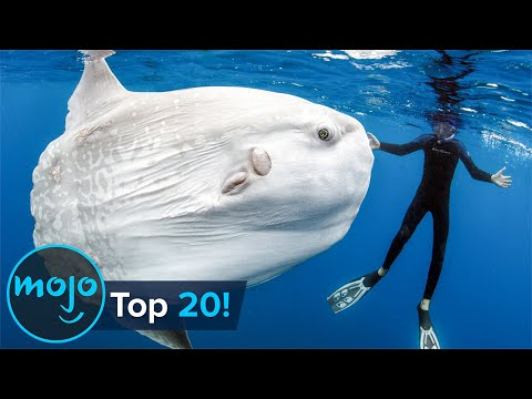 Top 20 Abnormally Large Animals That Really Exist