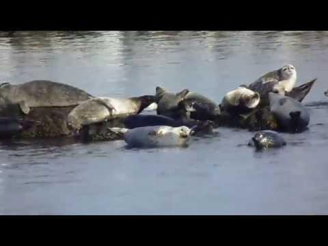 NYC Seals