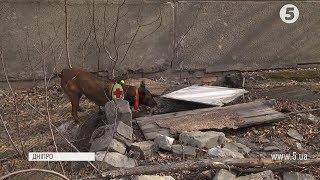 Собака знайшов пенсіонерку, яка просиділа в колодязі 2 доби в Дніпрі
