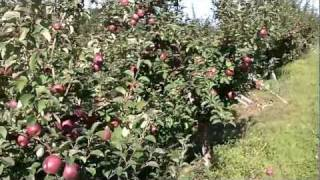 Macks Apples U-Pick.MOV