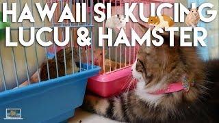 Hawaii Si Kucing Lucu & Hamster | Kids Brother