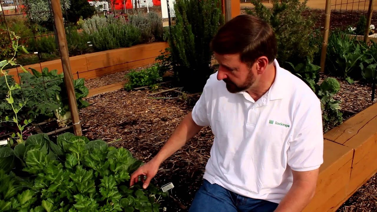 Organic Gardening - Dos and Don\'ts - YouTube