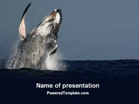humpback whale powerpoint templatepoweredtemplate - youtube, Modern powerpoint