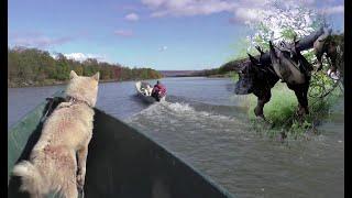 Охота на утку Камчатка осень 2020 часть 3 Охота рыбалка лесная избушка