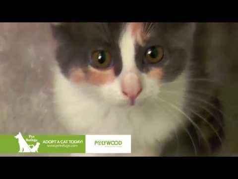 POLYWOOD® - National Cat Day 2015