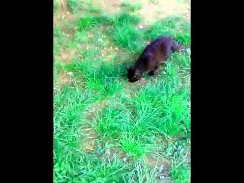 Кошка поймала змею в центре Ростова
