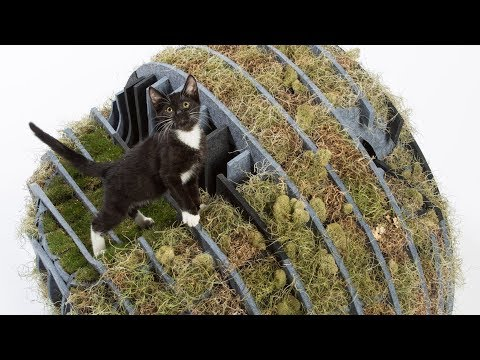 Flora-Gato is a cat shelter made from moss and recycled plastic