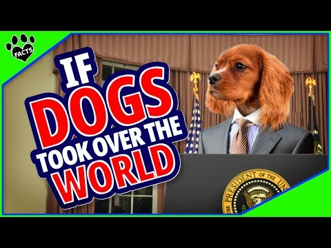 What If DOGS Took Over The World?
