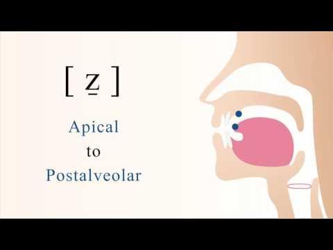 [ ẕ ] voiced apical postalveolar sibilant fricative