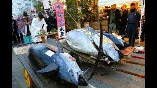 Японские Традиционные Шоу - Разделка Огромного Тунца Японским Мастером