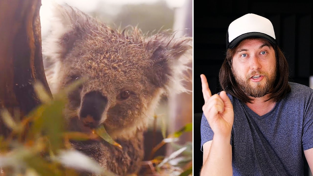 Ozzy Man Reviews: Happy Aussie Animals + Bushfire Fundraiser