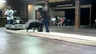 Darkco Vom Blake Male Rottweiler Weight Pulling