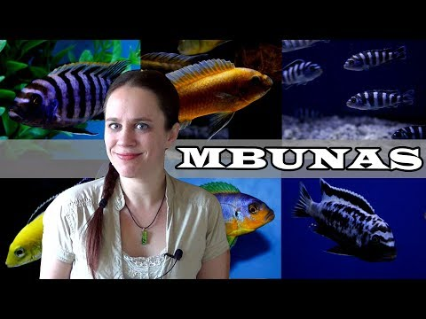The Mbuna Aquarium - Lake Malawi African Cichlids