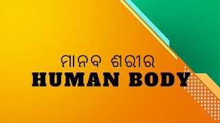 ମାନବ ଶରୀର | Human Body | Health Guruz | Odia