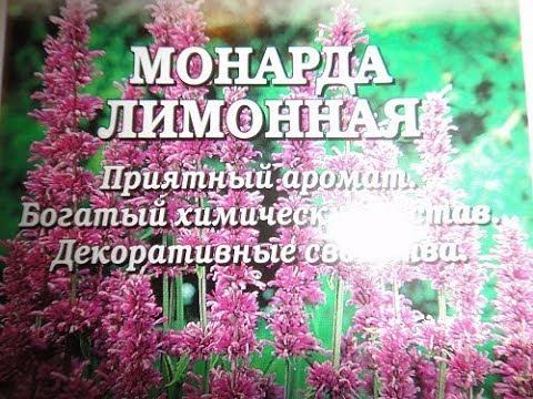 МОНАРДА ЛИМОННАЯ--ВКУСНЫЙ ЦВЕТОК.