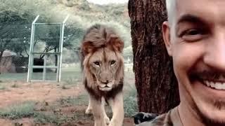 Wait for it... 😄 lion with Dean Schneider