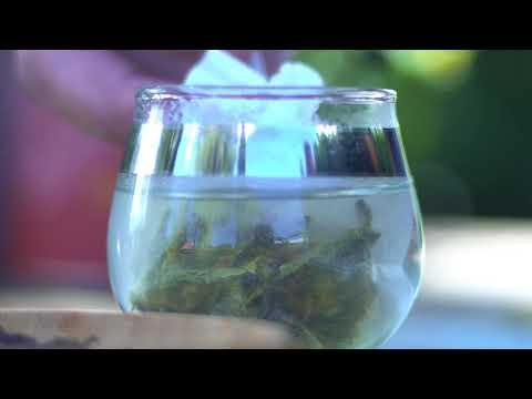 Tea Market - Santiago Solórzano - Tea Sommelier de TeaMarket.co